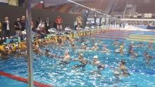 Совершенствование техники плавания юных спортсменов